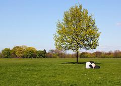 Lone tree of Love