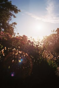 Photo with yellow and red flowering bushes in the foreground, and trees and a blue sky in the background, with lens flare.